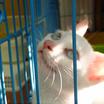 【保護猫カフェ閉店】保護猫への愛情をありがとうございました。