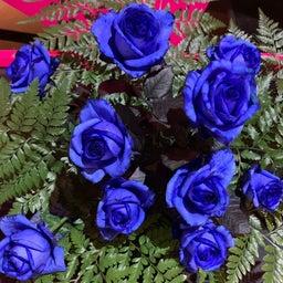 画像 ブルーのバラが‼️ の記事より 1つ目