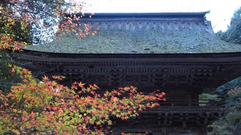 大矢田神社もみじ谷2020-1