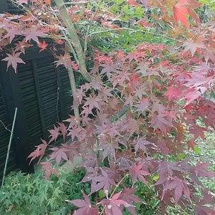 我が家の秋も ぼちぼち終わりですねの画像