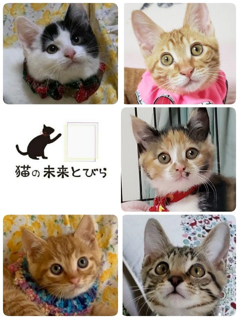 未来 と びら 猫 の