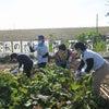 カカラ便り 大収穫祭☆彡の画像