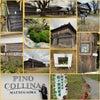松ヶ岡開墾場へ…ピノ・コッリーナワイナリー♡一度のケアで生まれ変わるアイテムの画像