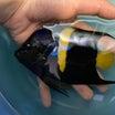 海水魚入荷のお知らせ