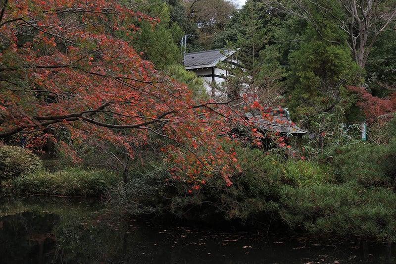 深大寺 亀島弁財天池のお堂と紅葉