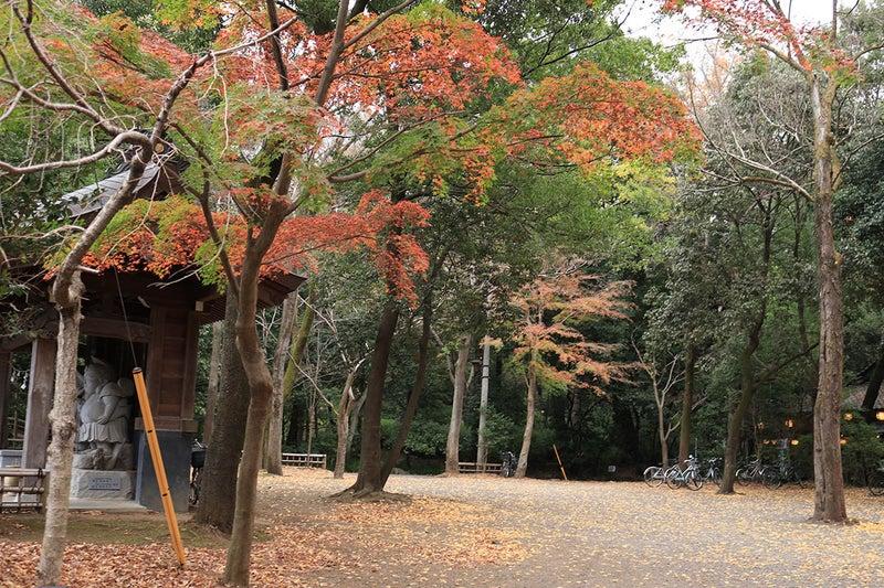 深大寺深紗堂前の広場の紅葉