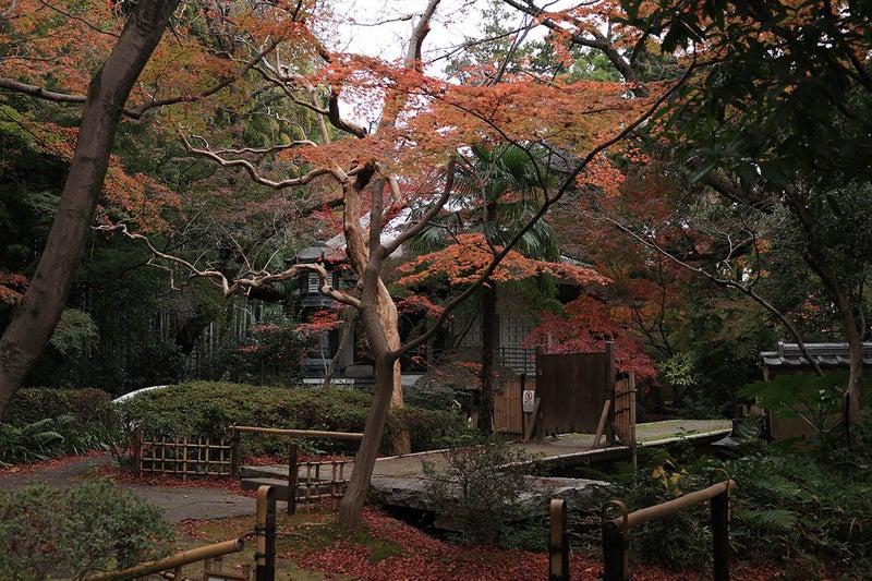調布大正寺のお庭の紅葉