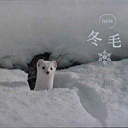 画像 冬空…。 の記事より 4つ目