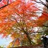 琵琶湖一周びわいち紅葉ソロツーリングin滋賀県長浜市の画像