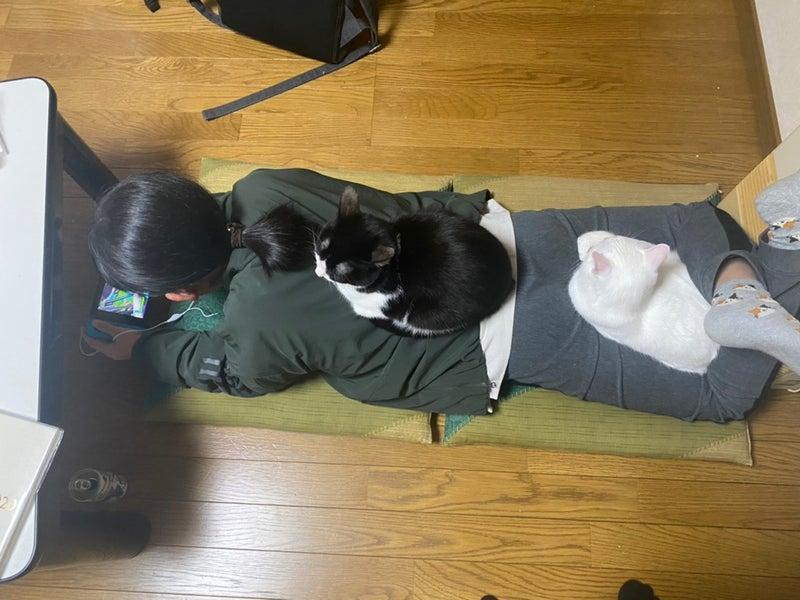 温かい所に集まる人と猫