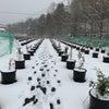 再び積雪の画像