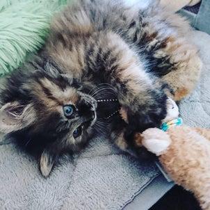 保護猫 2か月スクスクと育っています・・・の画像
