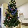 クリスマスツリーを飾りました♪の画像