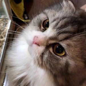 増えすぎた動物に困惑する猫の画像