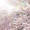 花より男子 ~類×つく~ 桜の記憶 tempest 27