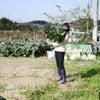 ロマネスコ生産農家さんを取材しましたの画像