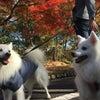 北斗琉犬のヒョウ、嫁入り後のハッピーライフの画像