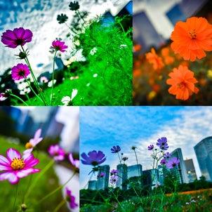 オアシスの花。の画像