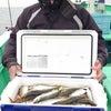 出船予定と最新釣果(8日更新)林遊船の画像