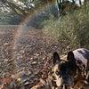 愛犬のいつかくるその日にできるだけ後悔しないように飼い主ができることの画像