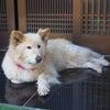 愛犬たちの写真の画像