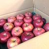 年末年始の前に!りんごで心身のケアの画像