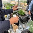 土壌や水分量の違いで野菜の育ち方がぜんぜん違ってきますの記事より