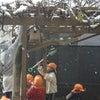 初雪の画像