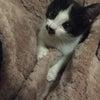 12月20日(日)どうしても猫を飼いたい方へ、不要不急じゃない「にゃんクルー譲渡会」開催!の画像