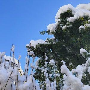 青空と太陽と雪の画像