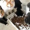 ケルビム・アニマルガーデン猫舎からご寄付のお願いの画像