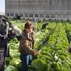 真冬のロケ!白菜の画像