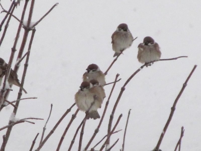 スピリチュアル 雀の鳴き声 雀は縁起物?