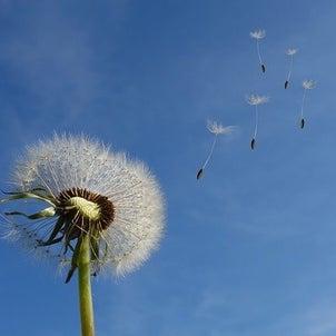 風の時代の画像