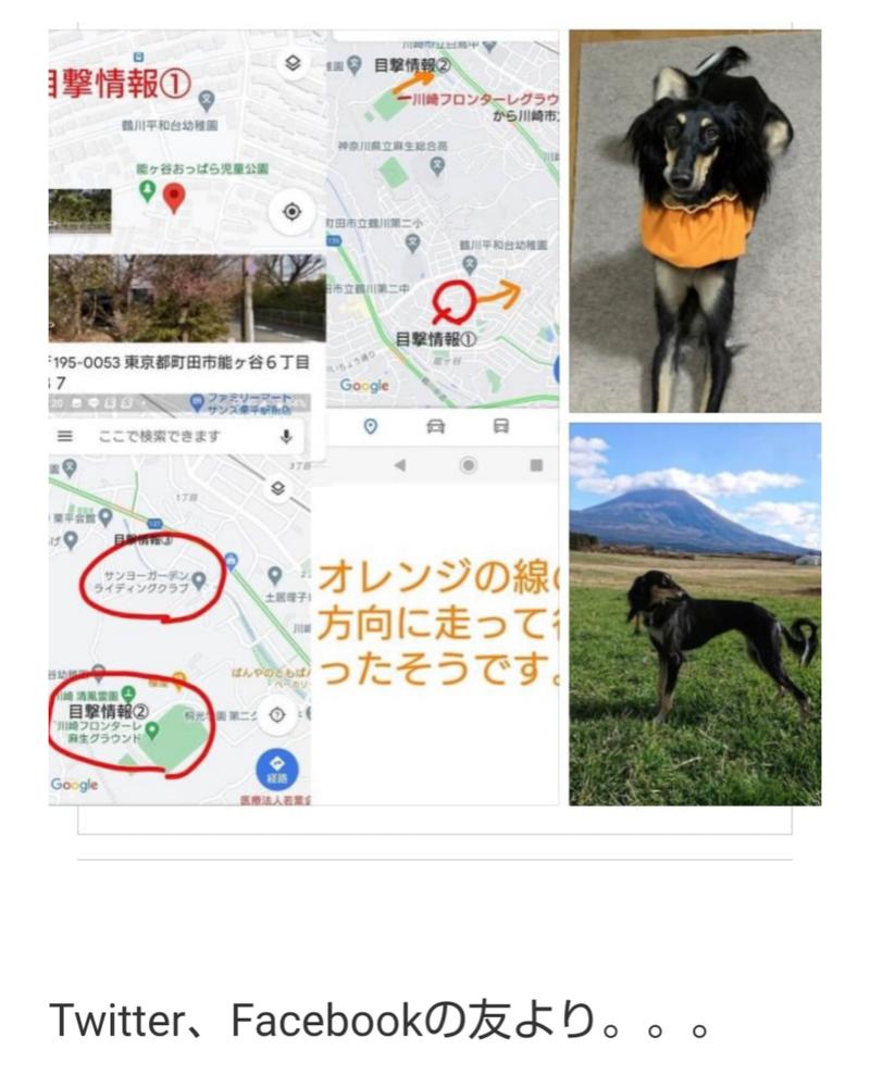 犬 町田 保護