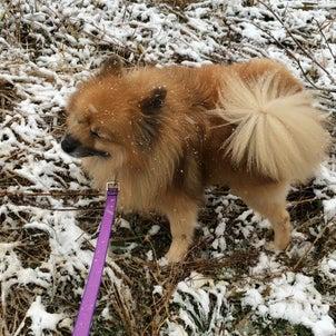 雪の日のお散歩の画像