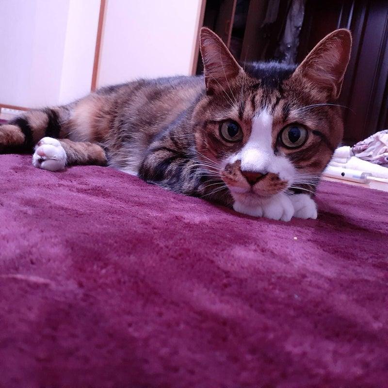 ホスピタル まねき猫