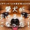ドッグマッサージの技が増えるたびに愛犬が歩けるようになった!の画像