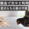 体験会でつぎつぎと判明!ドーベルマン&柴犬の肩の不調の画像