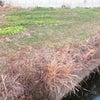 三角菜園の草刈りの画像