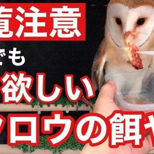 【閲覧注意】でも見て欲しいフクロウの餌やりの画像