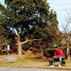 12月23日(水)たま~に公園で弁当食べたくなる時ってあるよね?の画像