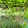 ほりぽん農園からの家庭菜園の画像
