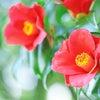 立春の決意〜ブログのタイトル変更の画像