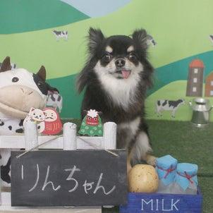 Petit♡dog~1/4本日のお友達~の画像