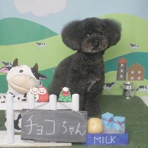 Petit♡dog~1/5本日のお友達~の画像