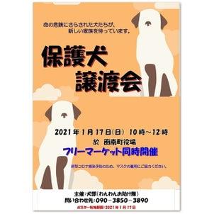 犬部わんわんお助け隊『保護犬の譲渡会』開催のお知らせの画像