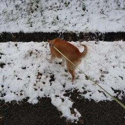 画像 夜でも雪を食べる犬 の記事より 1つ目