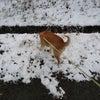 夜でも雪を食べる犬の画像