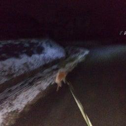 画像 夜でも雪を食べる犬 の記事より 3つ目